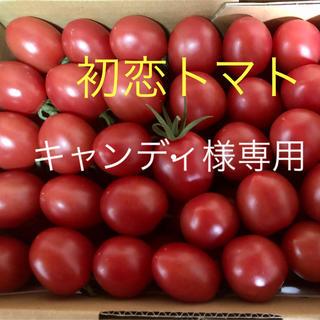 初恋トマト2キロ【キャンディ様専用】(野菜)