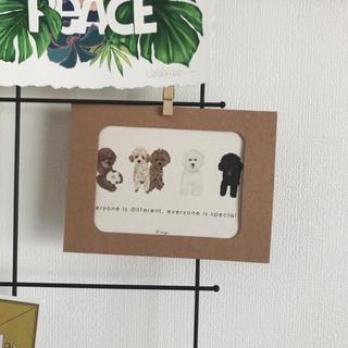ロンハーマン(Ron Herman)のトイプードル インテリア ポストカード(インテリア雑貨)
