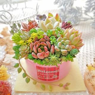 多肉植物 贅沢寄せ植え ピンクリメ鉢×welcomeラベル ピンクルルビー入り(その他)