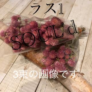 ドライフラワー センニチコウ 北海道花材(ドライフラワー)