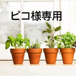 カネボウ(Kanebo)のピコ様専用(日焼け止め/サンオイル)