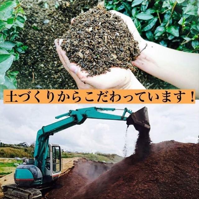 八十八夜の茶(静岡産深蒸し茶) 本年度の上質な一番茶のみ使用 食品/飲料/酒の飲料(茶)の商品写真