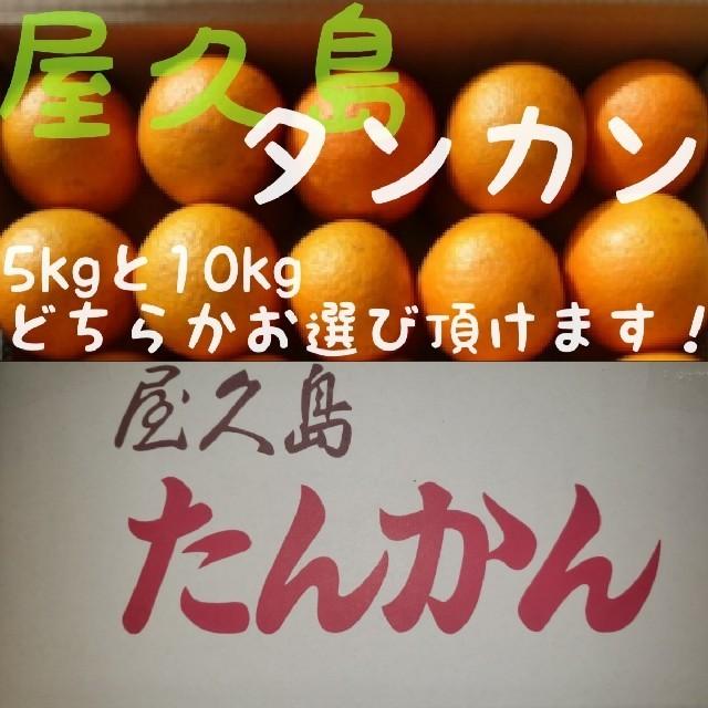 2月25日まで! 屋久島産 タンカン(みかん)10kg 食品/飲料/酒の食品(フルーツ)の商品写真