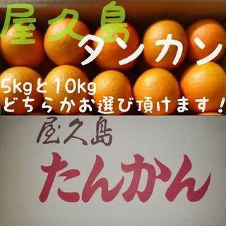 2月25日まで! 屋久島産 タンカン(みかん)5kg(フルーツ)