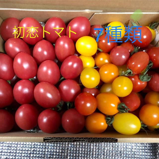 ミニトマト詰め合わせ【箱込2キロ】2/16午後発送 食品/飲料/酒の食品(野菜)の商品写真