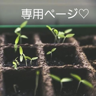 Hajikko様専用ページ♡(野菜)