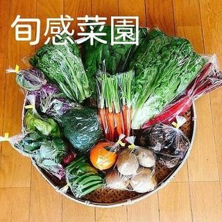 新鮮野菜セット100-⑥(野菜)