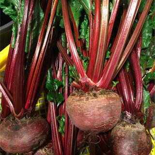 無農薬ビーツ 5kg未満(野菜)
