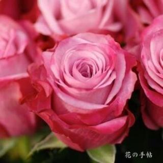 [予約]珍しい四季咲き中輪~大輪バラ紫系ピンクディープウォーター根付き苗1株(その他)