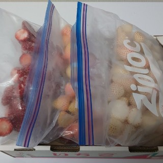 えいたん様専用 奈良県産 冷凍イチゴ 三種set(フルーツ)