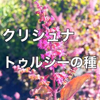 ❇入手困難‼️❇【万能ハーブ】クリシュナトゥルシーの種 10粒 ホーリーバジル(野菜)