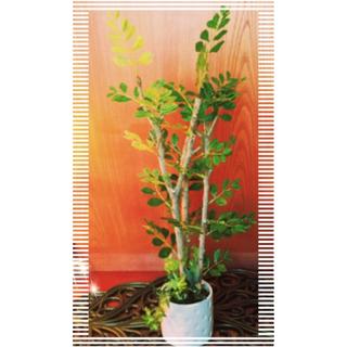 Francfranc - 新品未使用フェイクグリーン人工観葉植物トネリコ