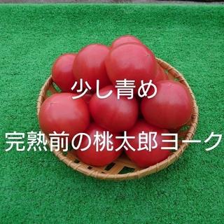少し青め完熟前の桃太郎ヨーク2.5キロ(野菜)