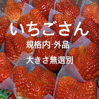 ○いちごさん○ イチゴ 苺