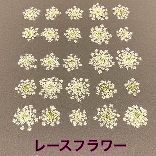 【25枚】レースフラワー (ホワイト)(ドライフラワー)