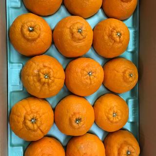 和歌山県有田産 一級品不知火15個 約6kg(フルーツ)