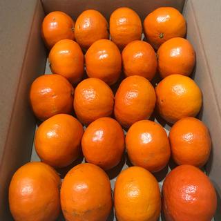 【Sサイズ】希少品種「べにばえ」天草産和製オレンジ S × 20個(フルーツ)