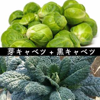 ✧*。西洋野菜 キャベツ2種類セット✧*。  畑からの直送便 無農薬 珍しい野菜