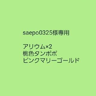 saepo0325様専用【アリウム・ギガンチウム】種子10粒(その他)