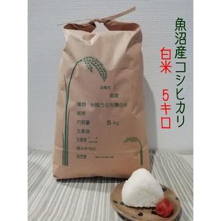 お米 5kg 令和元年魚沼産コシヒカリ白米