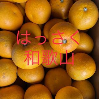はっさく 和歌山 11キロ 家庭用 八朔 ハッサク