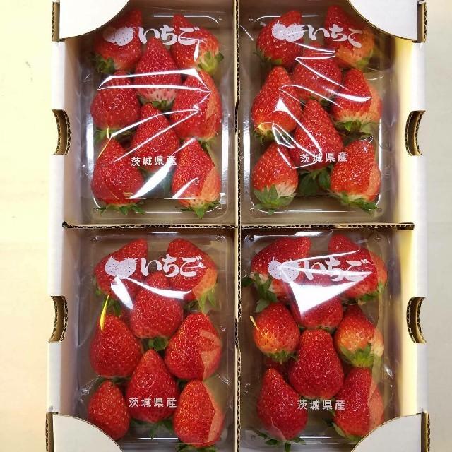予約受付専用 完熟とちおとめ 4パック1箱 クール代込み 食品/飲料/酒の食品(フルーツ)の商品写真