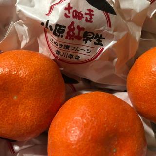 ははさん様専用  越冬さぬき紅MS×4箱&ひめ10p(フルーツ)