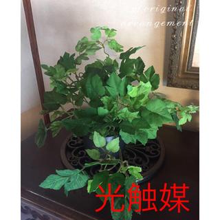 光触媒 人工観葉植物 イングランドアイビー3142