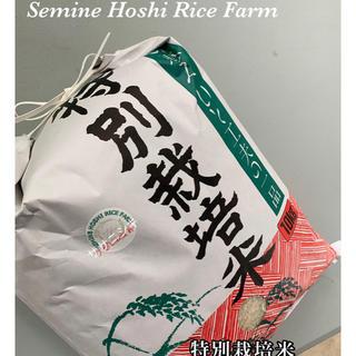 星光のキラキラ米✨【ササニシキ10キロ】🌾白米