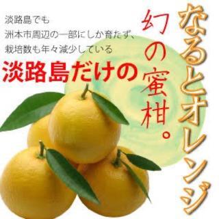 【pu1222様専用!】淡路島なるとオレンジ お試しサイズ(フルーツ)