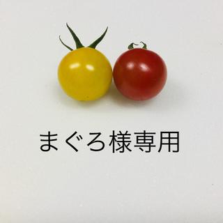 まぐろ様 ミニトマト3kg(野菜)
