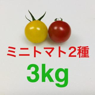 農家直送 ミニトマト2種 3kg(野菜)