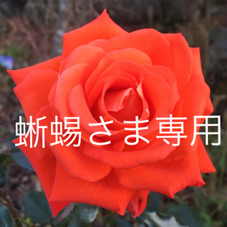 オニツカタイガー(Onitsuka Tiger)の【新品・ 未使用‼️】オニツカタイガー 24.5cm(スニーカー)
