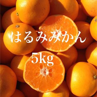はるみみかん5kg (箱込み)(フルーツ)