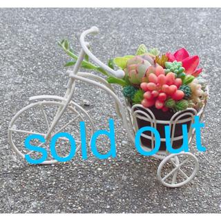 ★★自転車❤️カゴ★寄せ植え★このまま飾れます★多肉植物(その他)