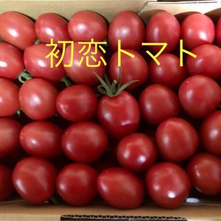 初恋トマト【箱込2キロ】2/23より順次発送(野菜)