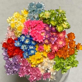 Flower様専用 スターフラワーブロッサム150本(ドライフラワー)