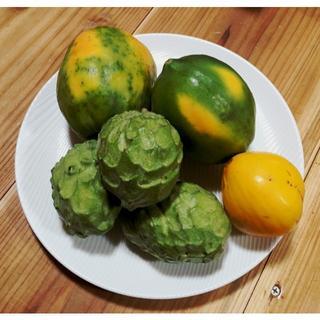 沖縄本島産 冬のフルーツセット+石垣産フルーツパパイヤ♪(フルーツ)