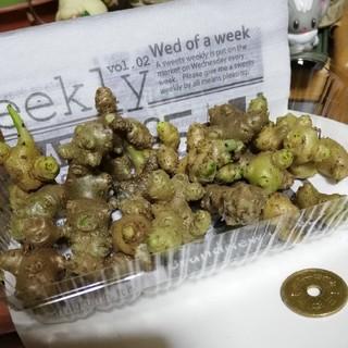 おかわかめ むかご 約100g(約23個)(野菜)