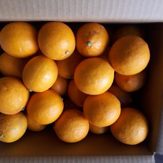 国産無農薬 マイヤーレモン 5kg サイズ混合 訳あり 送料無料 食品/飲料/酒の食品(フルーツ)の商品写真