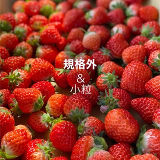 規格内、規格外バラ詰め●箱込2kg●さがほのか苺いちごイチゴ(フルーツ)