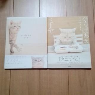 タカラジマシャ(宝島社)のぐぅぱぁネコ ミーヤ 関由香(アート/エンタメ)
