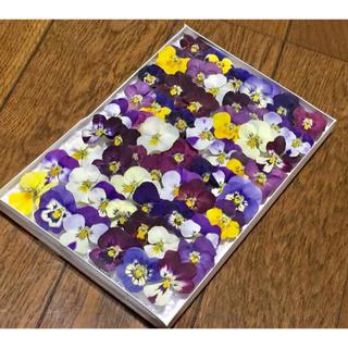 お花屋さんが作った春の彩りビオラのドライフラワーお詰め合わせ   34(ドライフラワー)