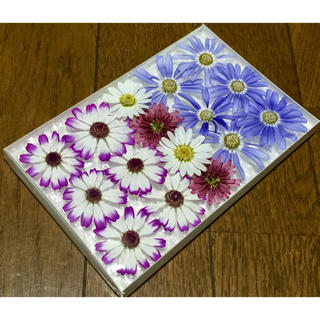 お花屋さんが作ったマーガレットとサイネリアのお詰め合わせ    31(ドライフラワー)