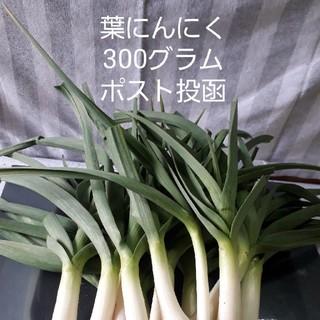 葉にんにく300グラムポスト投函農薬不使用栽培(野菜)