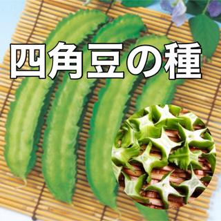 【珍妙‼️】四角豆の種 10粒 野菜 シカクマメ 家庭菜園 タネ たね(野菜)