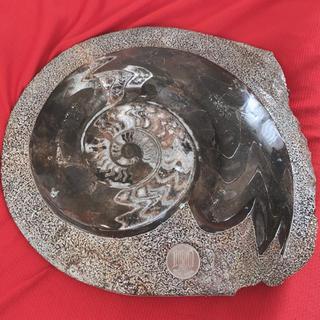 アンモナイト  本物化石24㎝(置物)