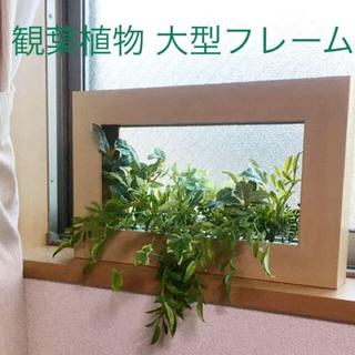 再値下げ 観葉植物 大型フレーム インテリアグリーン 多肉植物(その他)