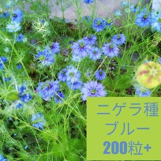 【まきどき】ニゲラ種500粒以上 ブルー(その他)