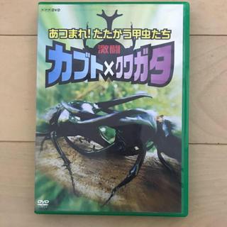 激闘 カブト×クワガタ あつまれ!たたかう甲虫たち(キッズ/ファミリー)